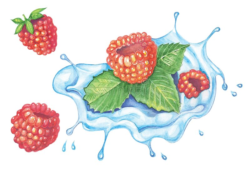 Download Raspberries stock illustration. Image of fruit, summer - 4983906