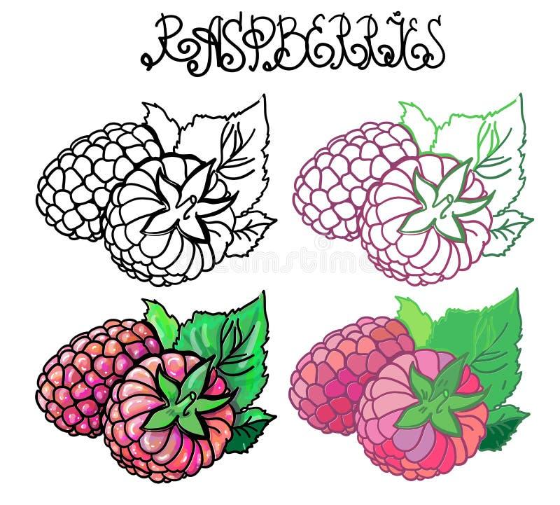 raspberries ilustração stock