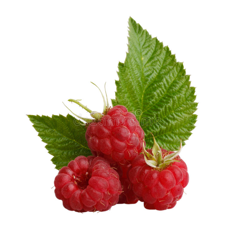 Free Raspberries And Leaves Stock Image - 15223261