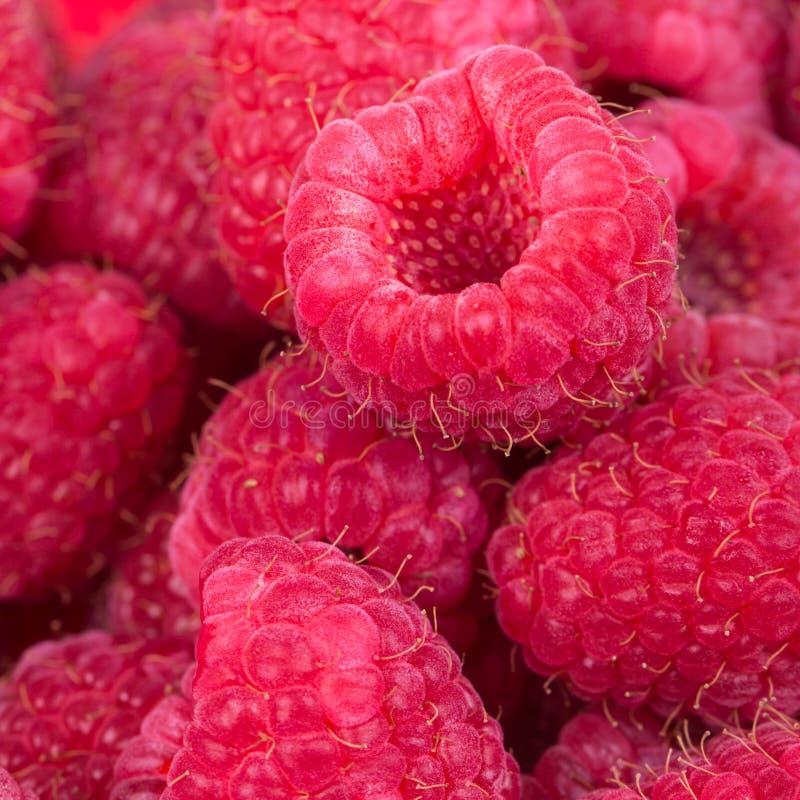 Download Raspberries Stock Photography - Image: 33125042