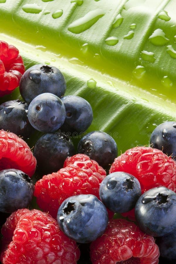 Raspberries Blueberries Leaf Background stock image