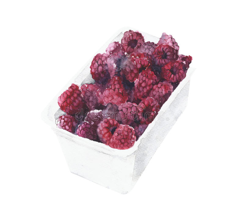 Raspberries in a box watercolor painting isolated on white background stock photo
