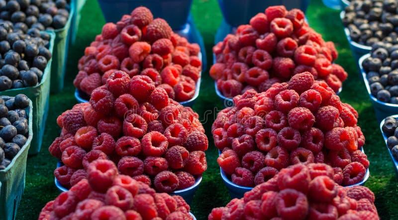 Raspberries in cartons royalty free stock image