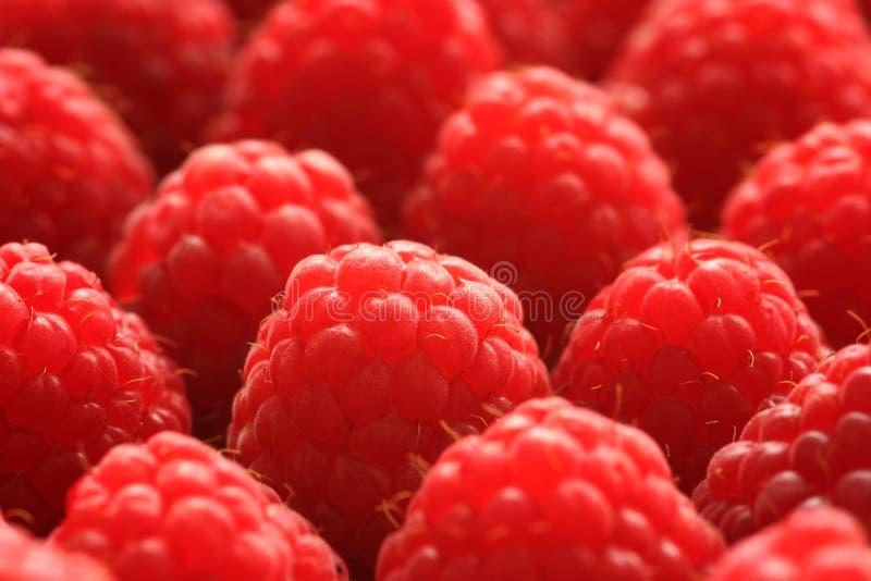 Raspberries Close-up stock photo