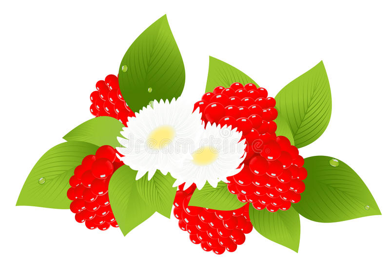 Download Raspberries And Flowers Royalty Free Stock Photos - Image: 12748338