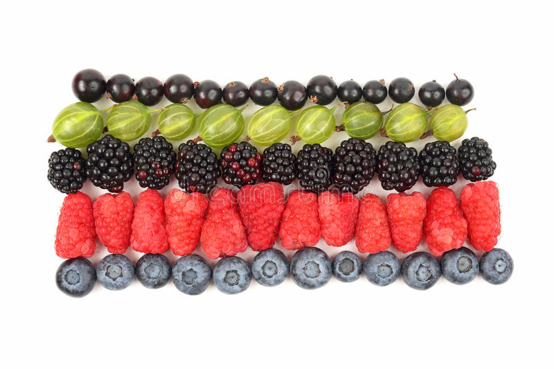 raspberries, gooseberries, blackberries, currants and blueberries in rows on a white background stock photography