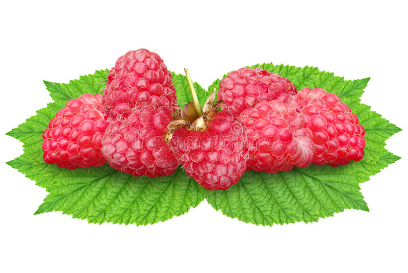 Raspberries on green leaves on a white background stock photos