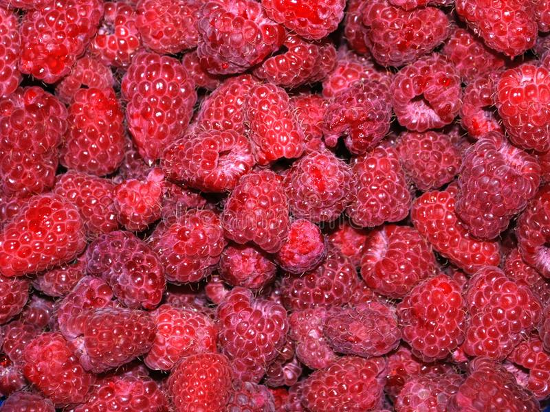 Raspberries, a lot, background, highly detailed stock photography