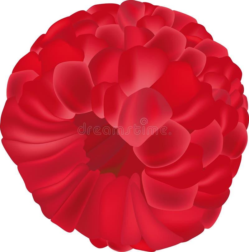 Download Raspberry stock vector. Illustration of berry, ingredient - 12556398