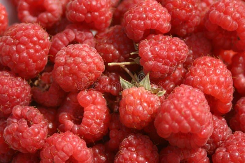 Download Raspberry stock image. Image of crop, fresh, healthy - 21904483