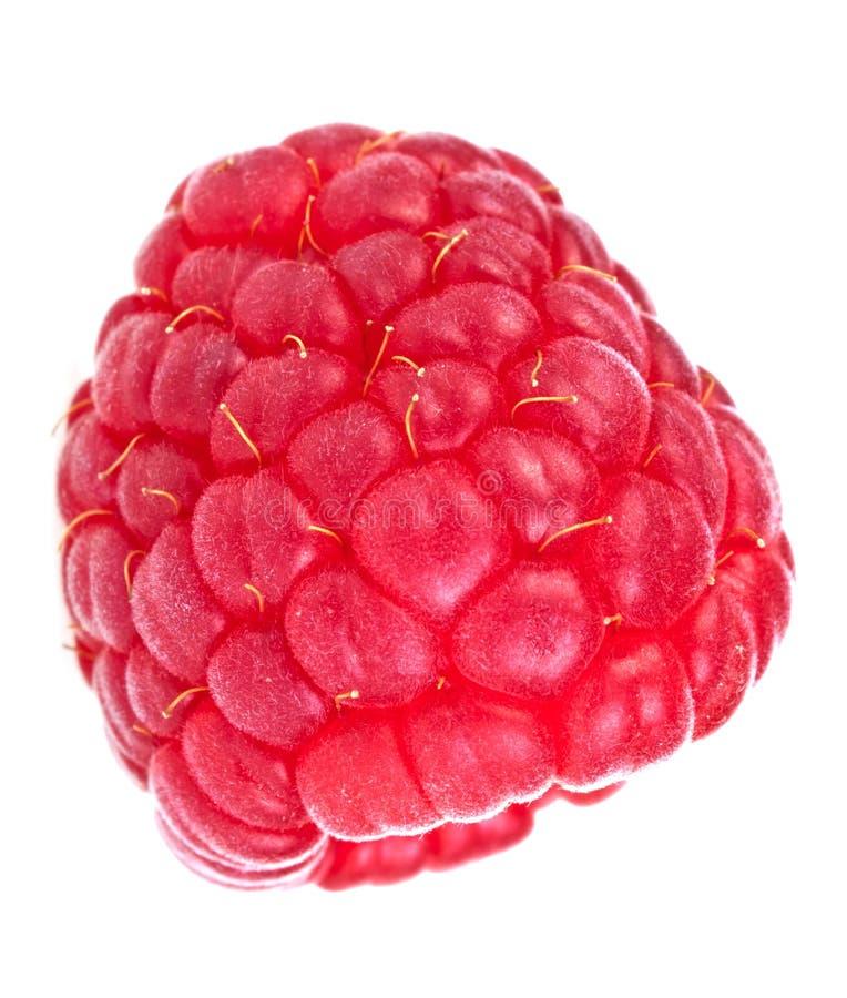 Raspberry Royalty Free Stock Image