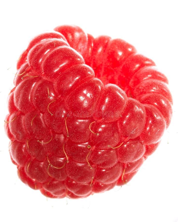 Download Raspberry stock image. Image of isolated, fruit, macro - 2584375
