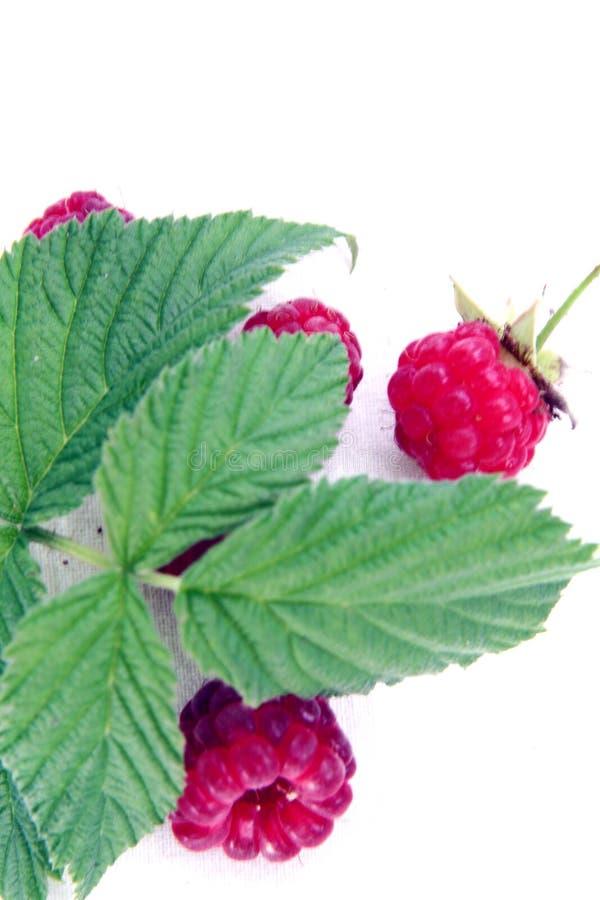 Free Raspberry Stock Photography - 2915922