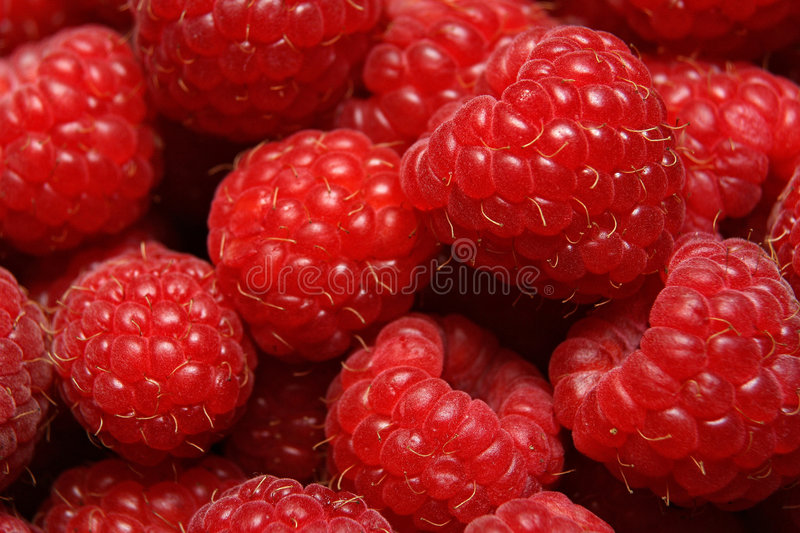 Download Raspberry stock photo. Image of yield, fruit, rosaceae - 955490