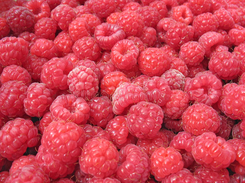 Raspberry. Close up royalty free stock images