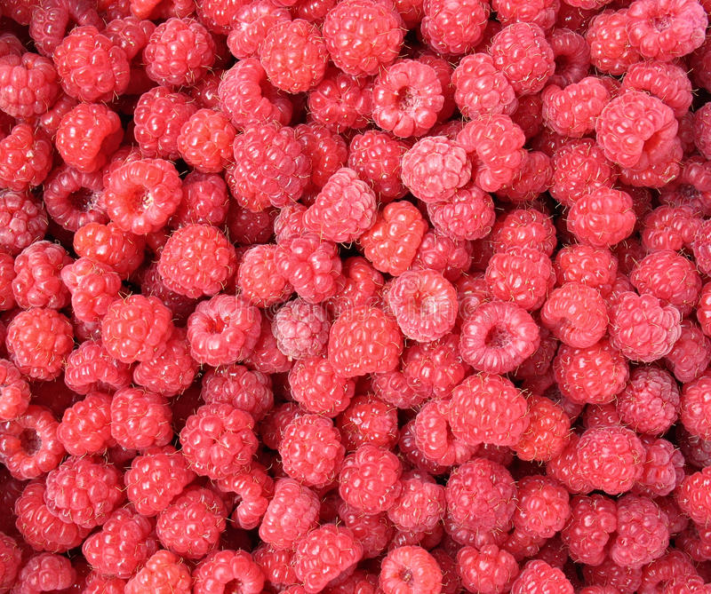 Raspberry close up - berry background royalty free stock photos