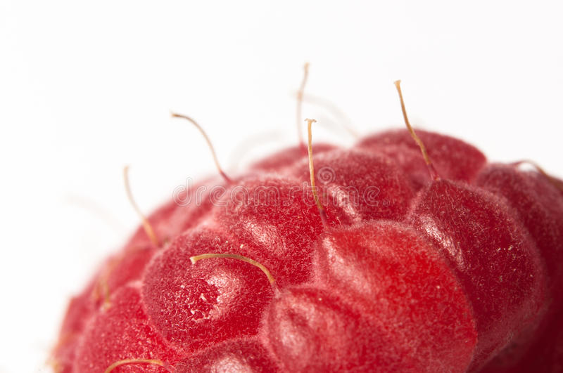 Raspberry extreme close-up stock photography