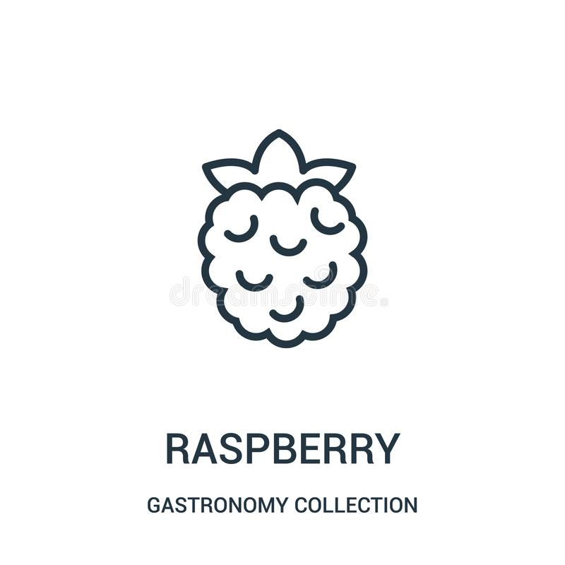 raspberry icon vector from gastronomy collection collection. Thin line raspberry outline icon vector illustration royalty free illustration