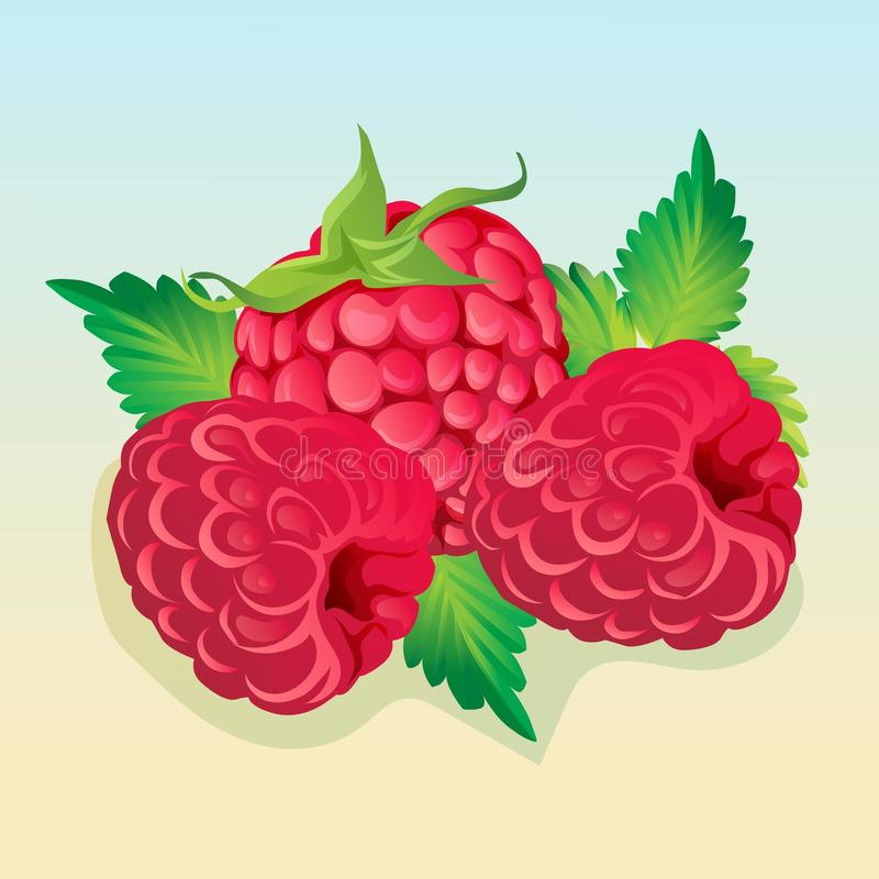 Raspberry illustration vector. Additional file in eps 10 vector illustration