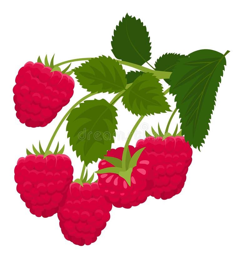 Raspberry isolated on white background. Raspberries. Forest berry. Raster Illustration stock illustration
