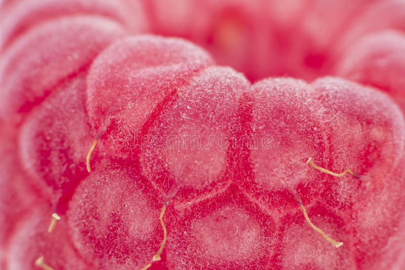 Raspberry Macro Royalty Free Stock Photos