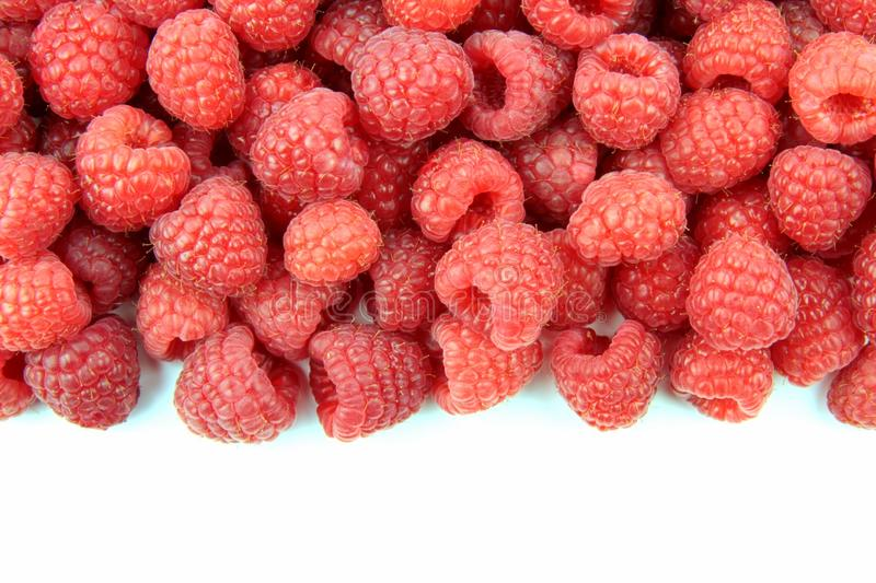 Download Raspberry stock image. Image of gourmet, close, fruity - 31297897