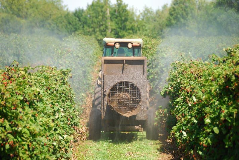 Raspberry Spray royalty free stock image