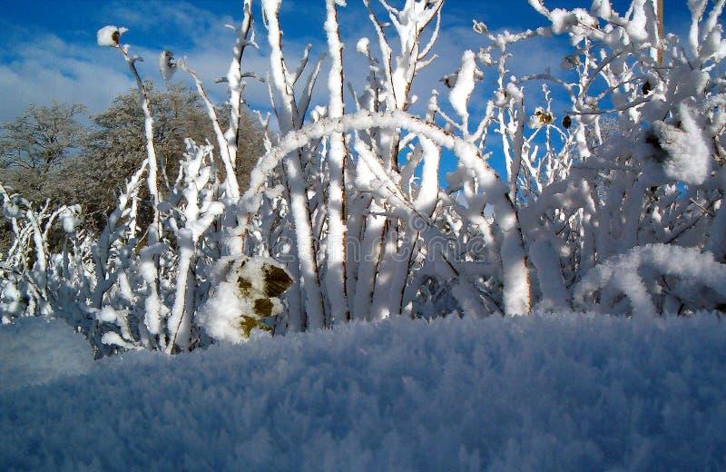 Raspberry in winter royalty free stock photos