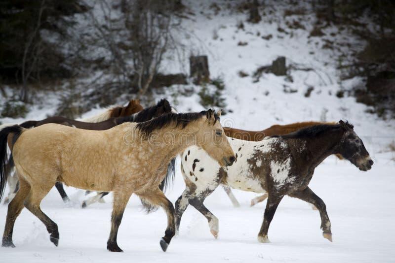 Rassemblement de cheval photo libre de droits