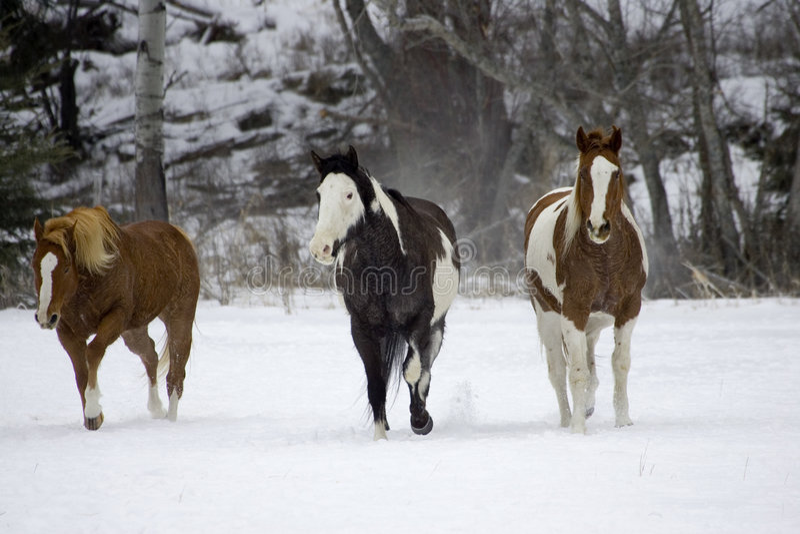 Rassemblement de cheval image stock