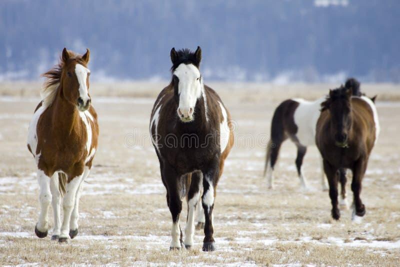 Rassemblement de cheval photographie stock libre de droits
