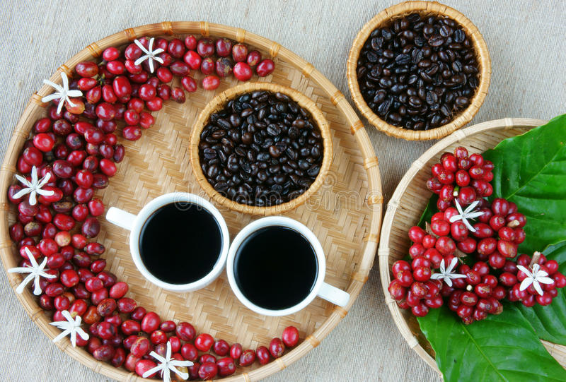 Rassemblez du café, le haricot, tasse de café, feuille, fleur photo libre de droits