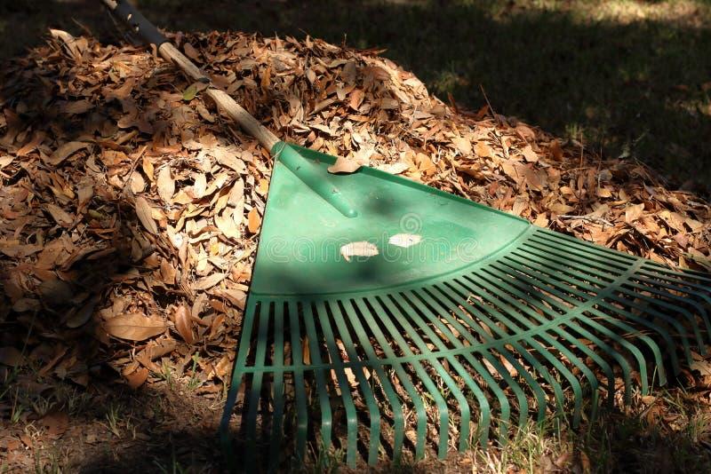 Rastrelli la stenditura attraverso un mucchio delle foglie nell'iarda fotografie stock