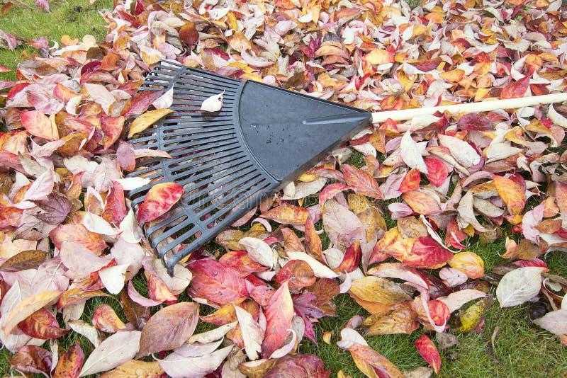 Rastrillo de jardín en las hojas caidas fotografía de archivo