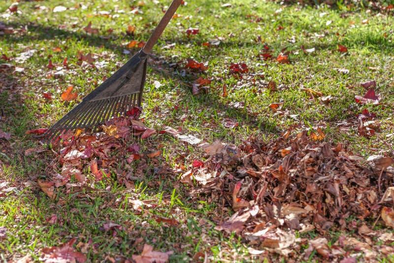 Rastrillo encima de las hojas de otoño cerca para arriba foto de archivo
