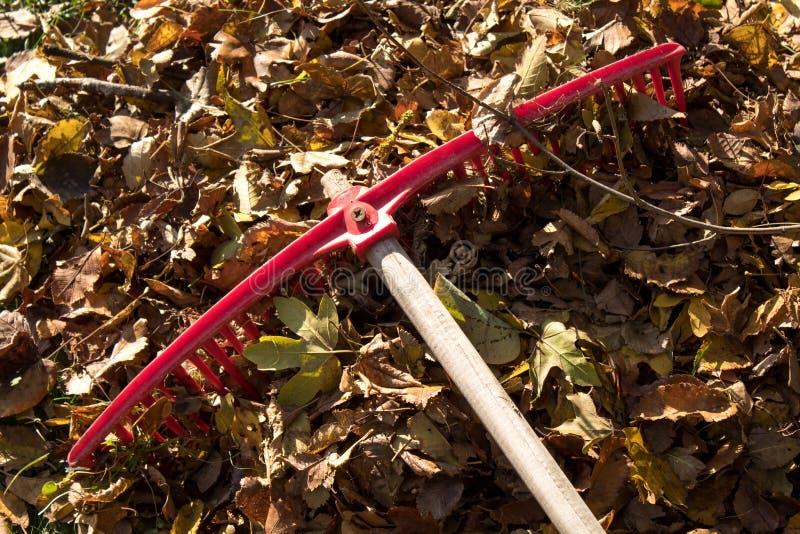 Rastrillo rojo brillante que descansa sobre un montón de las hojas de otoño recientemente rastrilladas imagen de archivo libre de regalías