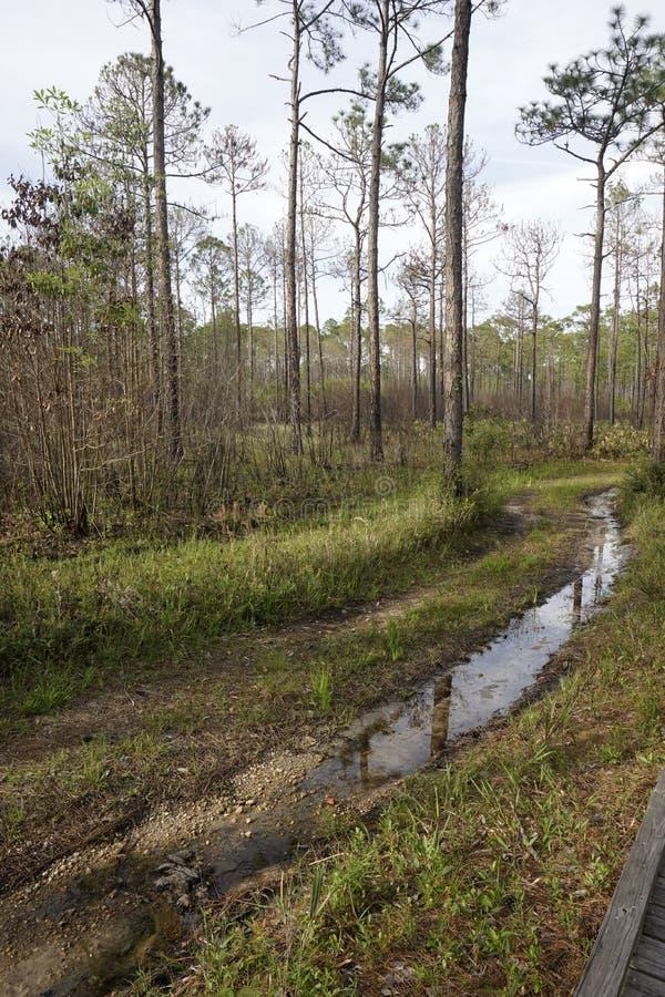 Rastro acuoso en el parque de estado del coto del pantano de Tarkiln en Perdido, la Florida fotografía de archivo libre de regalías