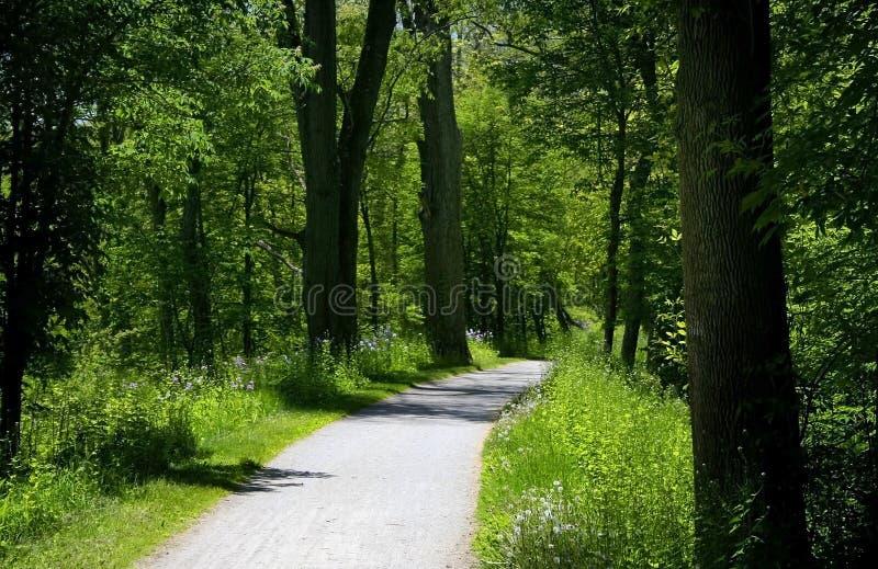 Rastro de la bici a través del bosque imagenes de archivo