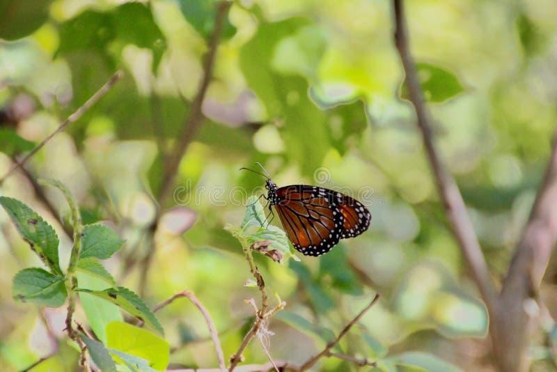 Rastro de la mariposa imagenes de archivo
