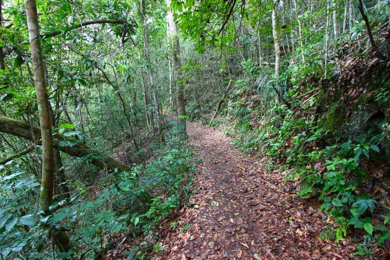 Rastro de la reserva del bosque de Guajataca fotografía de archivo libre de regalías