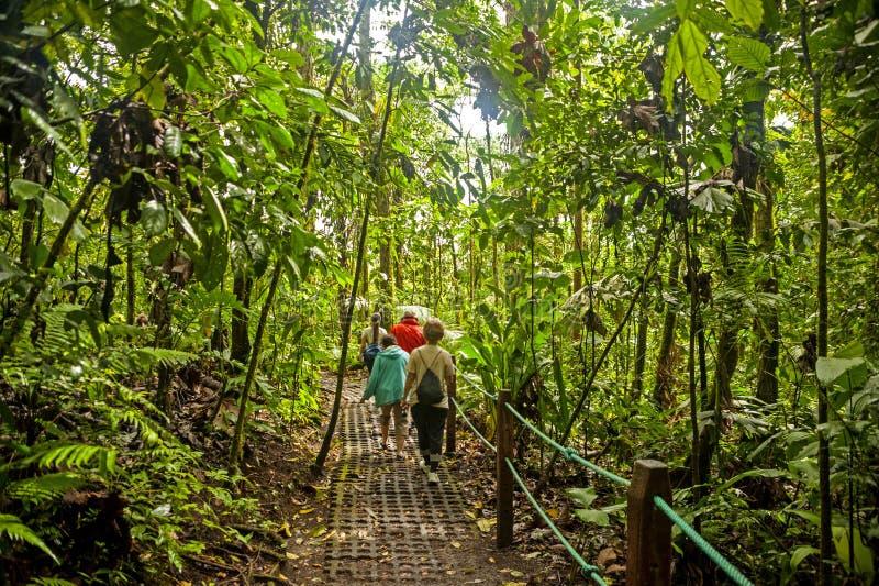 Rastro de la selva tropical foto de archivo libre de regalías