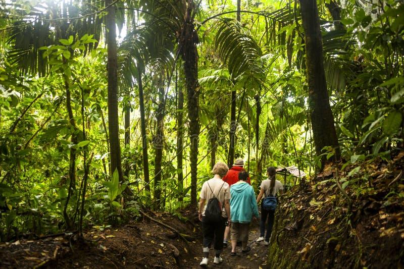 Rastro de la selva tropical imágenes de archivo libres de regalías