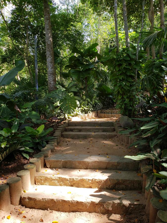 rastro de la suciedad con las escaleras en medio de la vegetación tropical imagenes de archivo