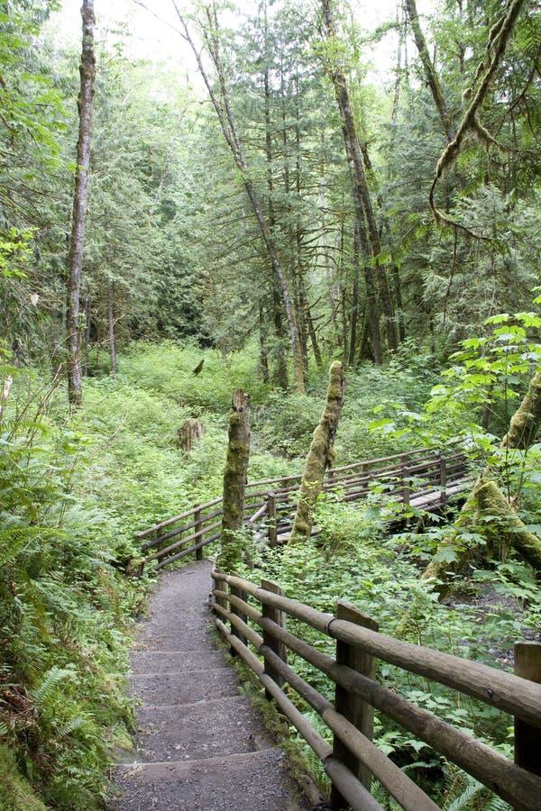 Rastro de la trayectoria de bosque foto de archivo
