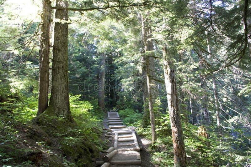 Rastro de la trayectoria de bosque imagen de archivo