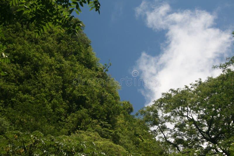 Rastro de las caídas de Moana, Oahu, Hawaii fotos de archivo libres de regalías