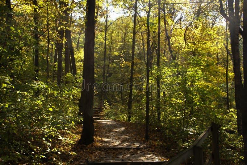 Rastro de madera a través del bosque que lleva a las escaleras rodeadas por los árboles verdes altos en ambos lados en un día sol imagen de archivo