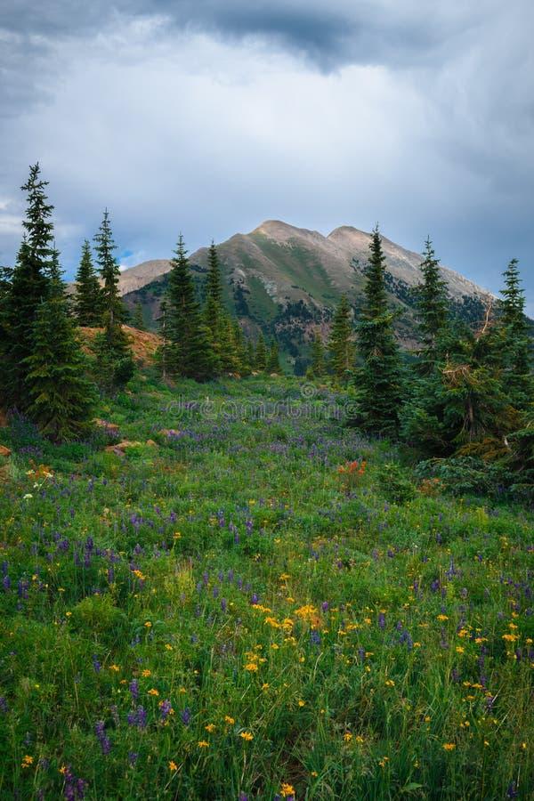 Rastro de montaña 403 imagenes de archivo