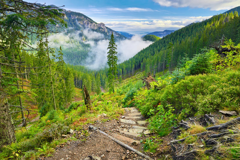 Rastro de montaña en el bosque las montañas de Tatra, Cárpatos imágenes de archivo libres de regalías