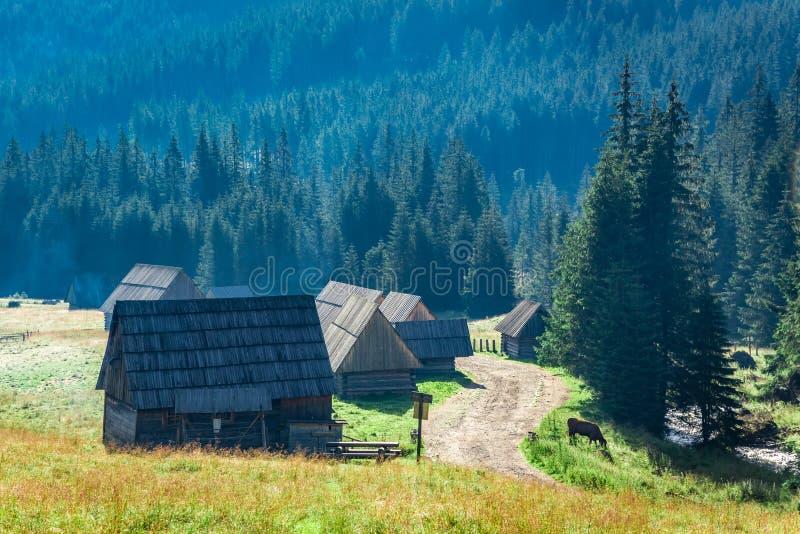 Rastro de montaña entre las cabañas en las montañas de Tatra, Polonia fotos de archivo